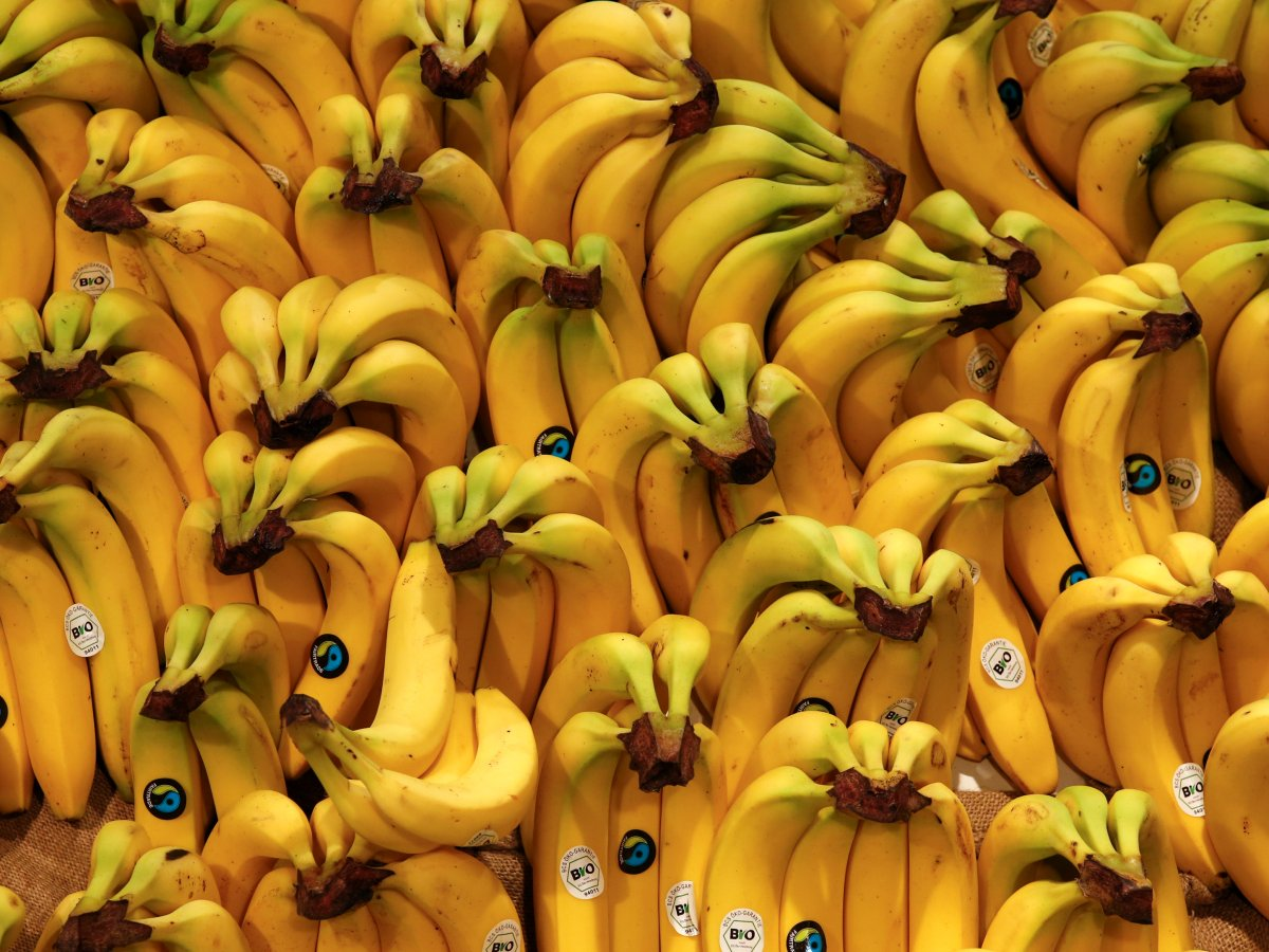 youve-seen-this-banana-before-its-the-cavendish-the-us-importednearly-48-billion-tons-of-them-in-2012-and-worldwide-banana-exports-these-days-are-worth-about-89-billion